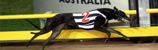 Amity Bale Honoured As Sandown 2009 Greyhound Of The Year