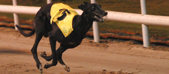 College Causeway Carrot As The Ladbrokes Irish Greyhound Derby Details Are Released