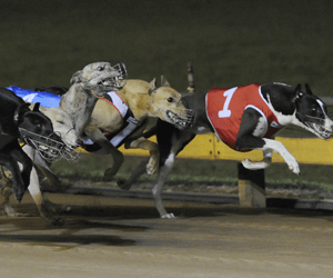 How to sell greyhound racing – equality of the sexes