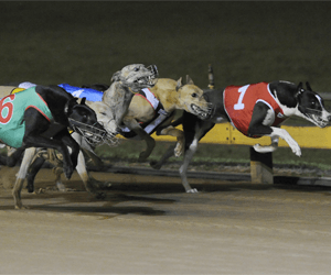 NSW greyhound participants invited to attend meeting in Newcastle