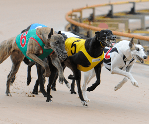 Casino Greyhounds Celebrate 75 Years Of Greyhound Racing