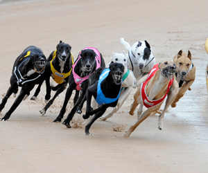 Greyhound racing tracks overdue for a review