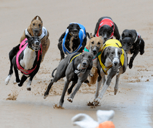 Crownbet partners with Australian Racing Greyhound for huge offer