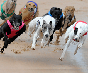 Ken Plumridge Fined For Heptaminol Positive From Appin Greyhounds
