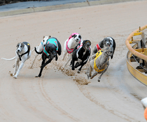 Neil Mann Kicks Off 2009 Coursing Season In Style
