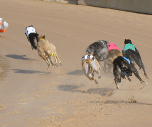GRSA Announce 2009 SA Greyhound Of The Year Finalists