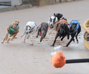 Races for slow greyhounds are not the answer