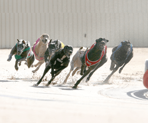 Upsets Galore In Paws Of Thunder Heats