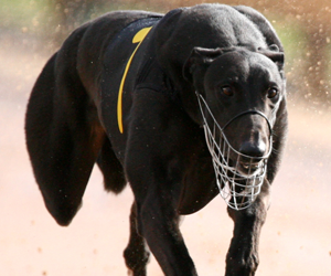 $20k Northern Rivers Vet K9 Reproductions Maiden Series Preview