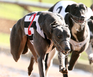 Greyhounds Australasia Recommend Cyber Dogs by 2012