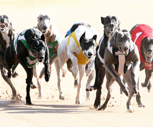 Greg Board slams GRNSW decision to suspend dogs