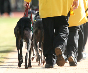 Mike Baird stands by his decision to ban greyhound racing