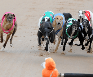 The two sides of Sandown greyhound racing