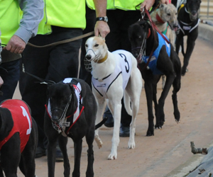 Can Bell Haven Become The First Tassie Stayer To Take The Sydney Cup?