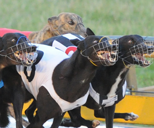 Ipswich Greyhounds Moving To Ipswich Turf Club's Bundamba Racecourse