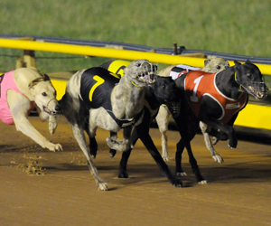 Fields released for 2015 Group 1 Australian Cup heats