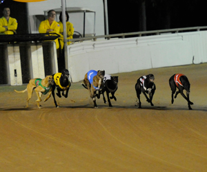 Suspended Fine Only For Wentworth Park Greyhounds Positive Swab