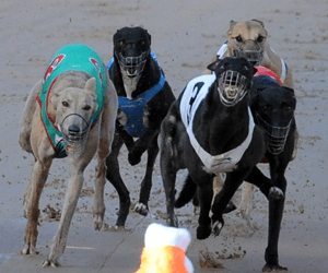 Bundanoon Qualifies Fastest For Casino's Blue Paws Final