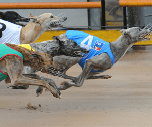 Exclusive One Awarded Australia's Best Greyhound Race For July 2012