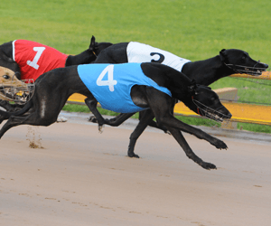 Bundanoon's Winning Casino Greyhound's Return