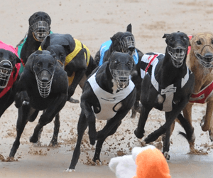 Bella Infrared brothers ready to go boom in Ballarat Cup heats