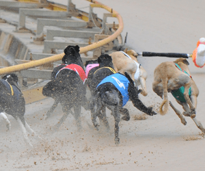 Miata Awarded Australia's Best Greyhound Race For May 2012