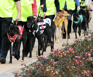 Queensland, Victoria say greyhound racing won't be banned