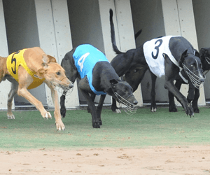 Surin' Sal On Track For Casino Cup Heats Ths Friday
