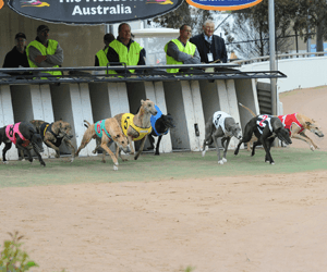Doovee And Prince Do Battle For Devonport Cup