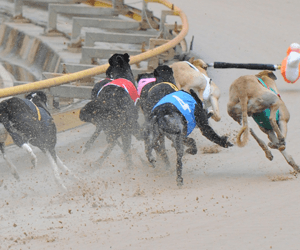 All A Blaze sets the time standard in Ladies Bracelet heats