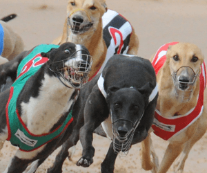 NSW Race Fields Legislation Approved