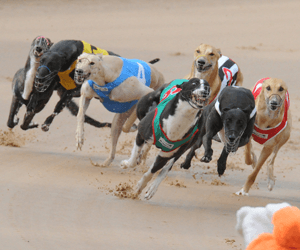 Julie Gauld's Whole Kennel Casino Winners