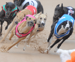 Victorian National Sprint Heats At The Meadows