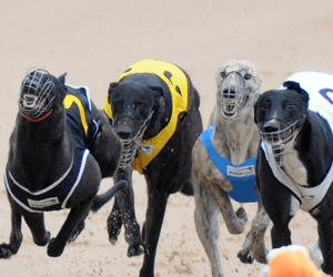 No Donuts Hungry For Success in Group 2 Richmond Derby final