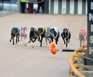 Ossie Chegia Disqualified For A Further Three Months Over Kennel Inspection