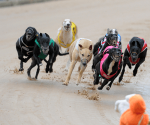 Potential Postitive Swab Alert To Greyhound Trainers
