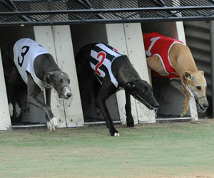 Robert Britton Runner Surprises All By Claiming Geelong's Winter Cup