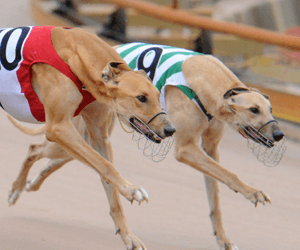 National Capital Distance Heats Smash Track Record