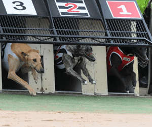 Robert Cooke's Nice Dash Leads To A Casino Greyhounds Double
