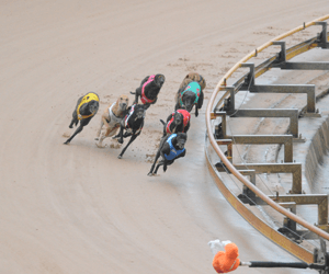 Greyhound Racing Tips For Friday 10th July 2009
