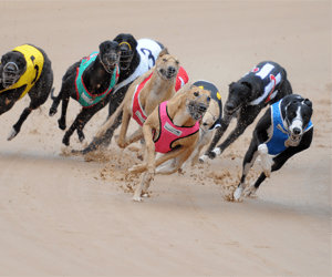 Betting on group 2 greyhound races