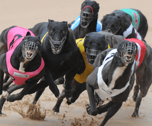 Working Dog Alliance opens some greyhound eyes
