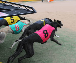 Gawler's Feature Event The Bunyip Gawler Gold Cup