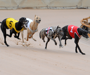 Greyhound racing truths are hard to find