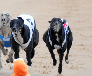 Sandown Greyhounds Hit For Six