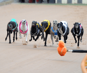 Heston Bale Awarded Australia's Best Greyhound Run January 2012
