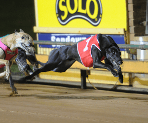 Winsome Joe & Magnifique Star In Bulli Gold Plate Heats