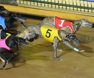 Group One Maturity Series Kicks Off At The Meadows Tonight