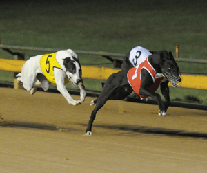 National Distance Champ Smart Valentino Returns To Wenty For Chairman's Cup