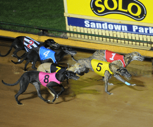Anna Anna Wins Blue Paws Maiden Final At Temora